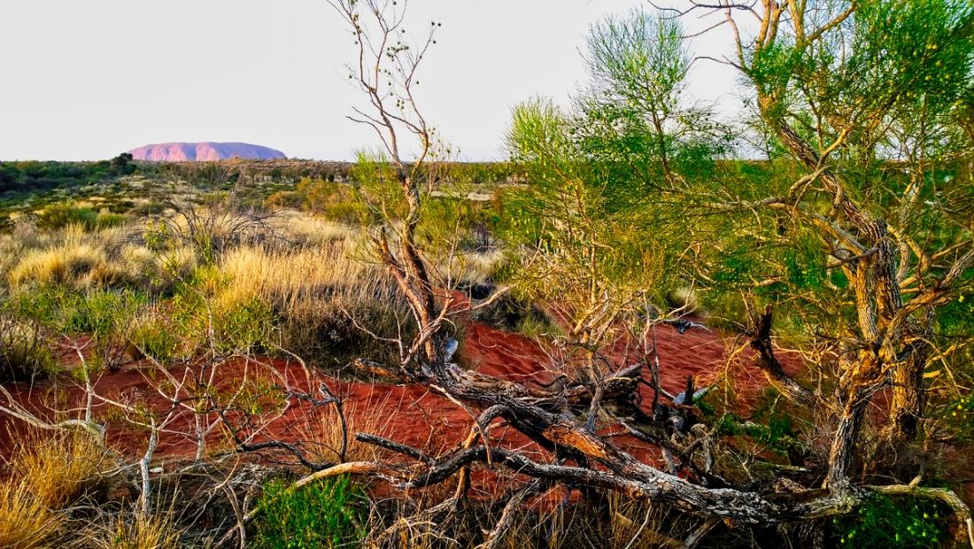 Uluru0008